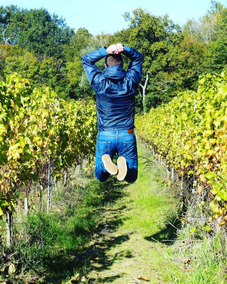 chateau morange blaye cotes de bordeaux vignes