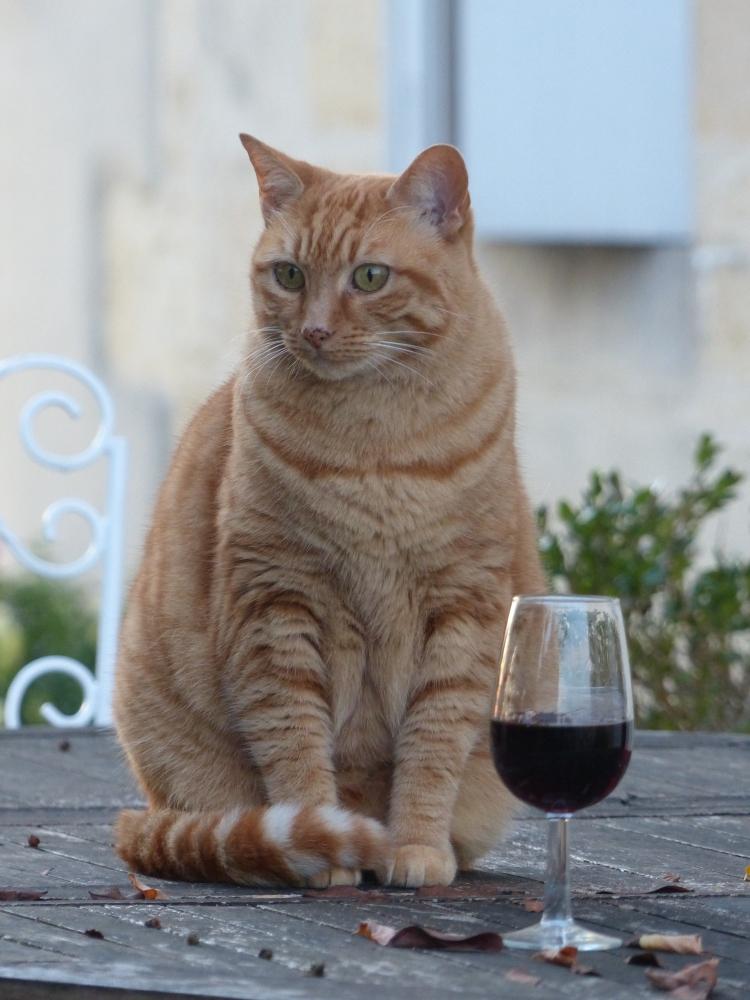 chat chateau morange Blaye Côtes de Bordeaux